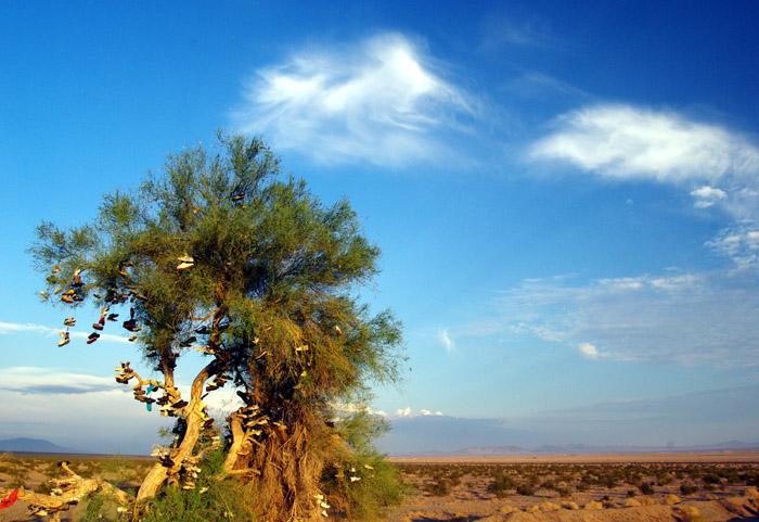 the Amboy shoe tree - July 2008